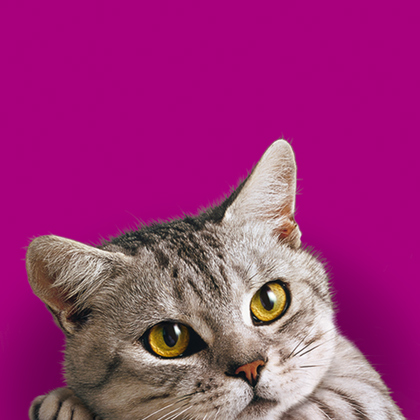 Agence communication Rangoon - promotion des ventes shopper marketing theatralisation prime différée personnalisable Whiskas Mars Pet Food & Care